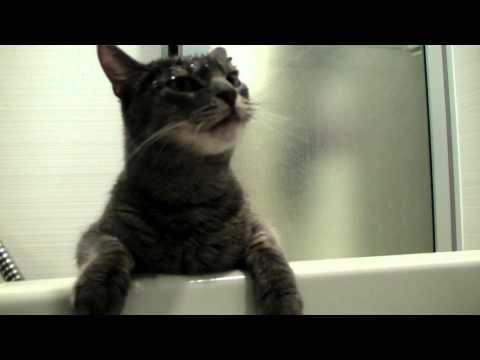 修行猫ウッディーのくしゃみ@0:50 修行猫ウッディー Woody Cat Shower