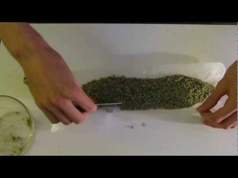 Rolling a One Ounce Joint! One fully stuffed cannon!