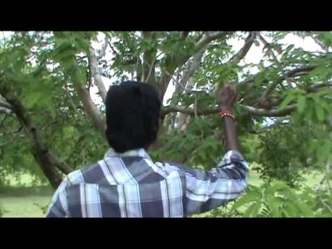 Vilabam Short Film video