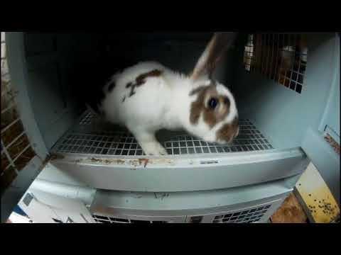 Переселение крольчих в новые клетки//Клетка изнутри