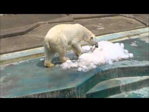 2011年7月24日 釧路市動物園 ツヨシとニジマス