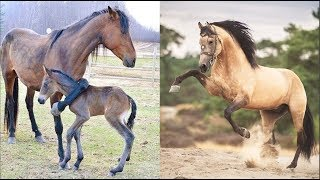 Cute And funny horse Videos Compilation cute moment of the horses Soo Cute! #2