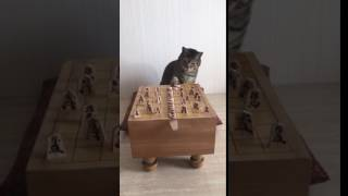 Cat plays dominoes with shogi game pieces 2
