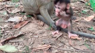 Monkey And Baby 3 - SweetPea Want To Walk