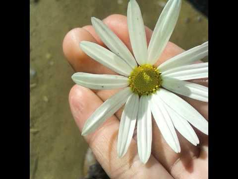 #flores #flowers #flowerporn #garden #gardenlovers #nature #instanature