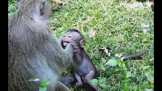 Bad Mom monkey Pinch Check And Push out not feed Baby/Wild Monkey