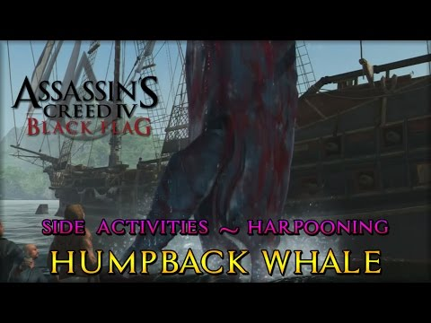 Assassin's Creed IV: Black Flag - Side Activities - Harpooning (Humpback Whale)
