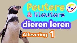 Dierennamen - Eerste Woordjes - Dieren Leren Aflevering 1 Peuters en Kleuters