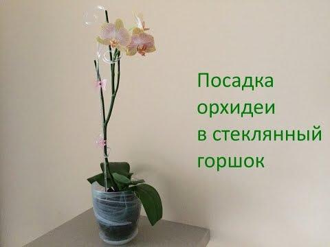 Сажать орхидею в стеклянный горшок 42