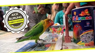 DUNIA HOBI : Video Lucu ! Unik ! Parrot Training School For Lovebird