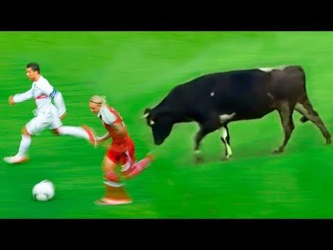 8 Tiere,die ein Fußballspiel unterbrochen haben!