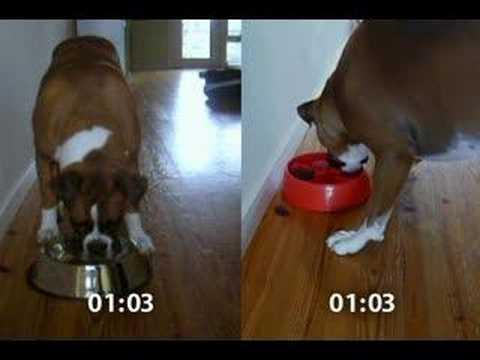 DogPause in Action (Full Length Version)