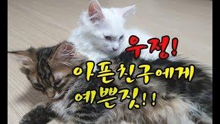 아픈친구를 위해서..고양이 우정! 착한그루밍!! Good cat to comfort a sick friend 病気の友人を上にする優しい猫