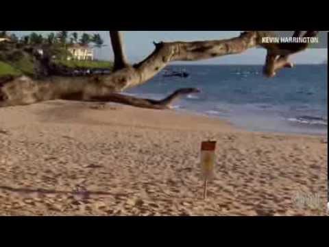 Hawaii shark attack leaves German tourist Jana Lutteropp dead