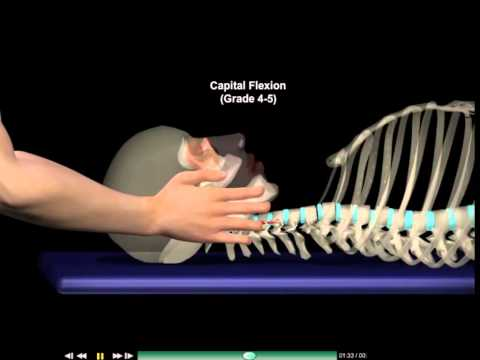 Muscle testing | Neck flexors | Neck stretching