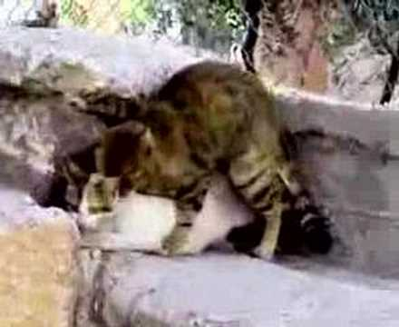 Animal Sex =)) video