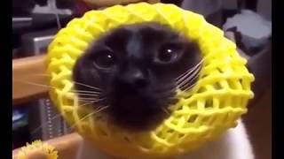 Ultimate FUNNY ANIMALS compilation - will make you laugh!