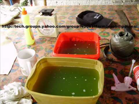 NoCost Moringa Leaf Extract As A Plant Growth Hormone.wmv