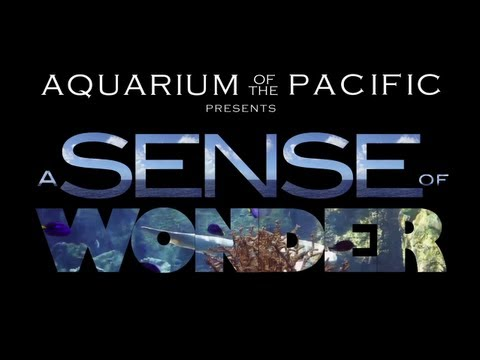 A Sense of Wonder Movie - Aquarium of the Pacific