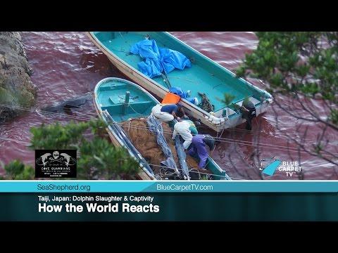 Taiji, Japan: Dolphin Slaughter & Captivity. How the World Reacts.