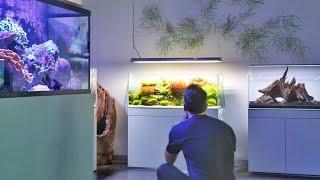 World Class Aquarium and Aquascape Store - Aquarium Design Group Tour