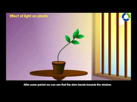 plant and light intensity