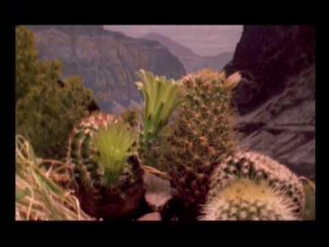 Grand Canyon, caratteristiche
