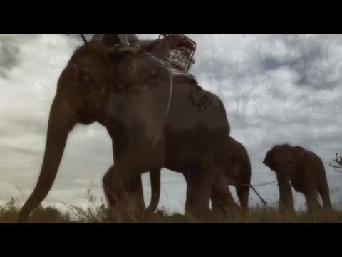 Elephants Return to the Forest Thailand