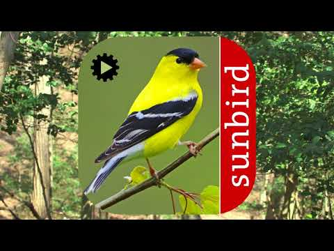 Bird Song Id USA Automatic Recognition songs calls APK Cover