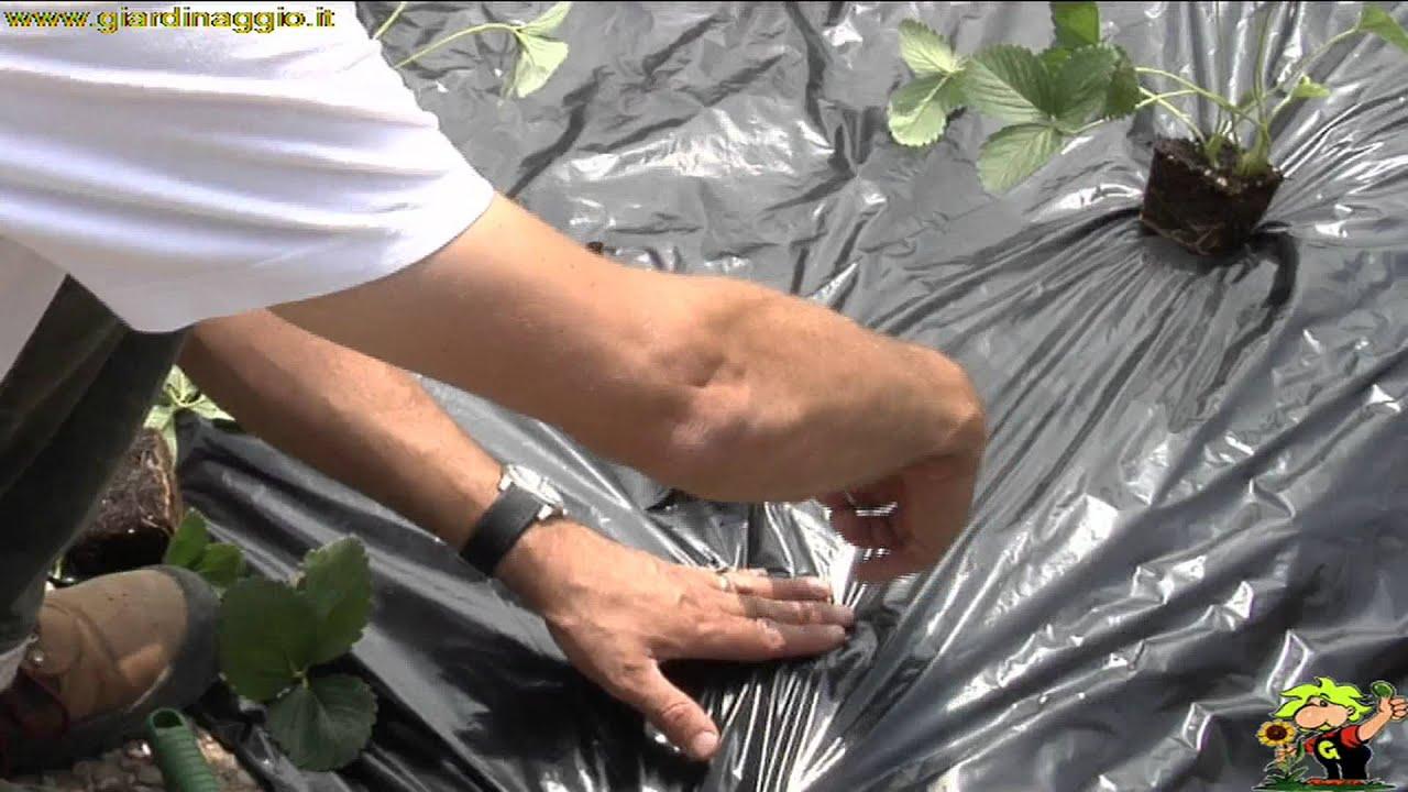 Coltivare le fragole youtube for Coltivare meloni