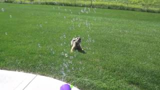 DOG vs. BUBBLES