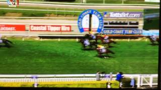 Gold Coast Race 6. Idiot runs on horse track  at finishing line 28-3-15