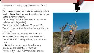 Argentina Red Stag In Argentina
