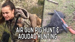Hunting Aoudad in West Texas and Feral Hog Hunting Adventures | VLOG