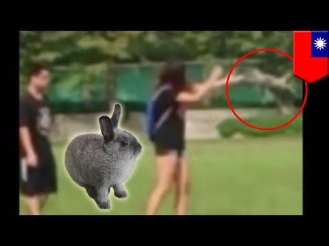 Animal Cruelty: Woman Throws Rabbit Repeatedly Against The Ground video