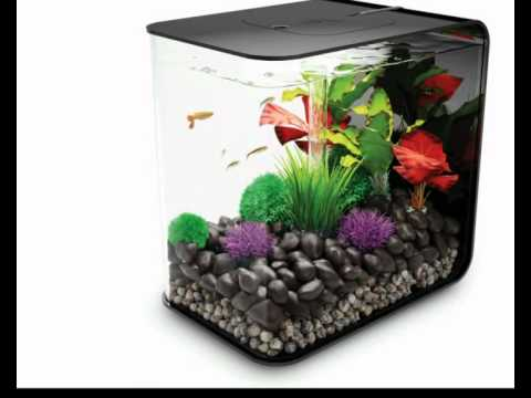 biOrb Flow 30l lifestyle-aquaristik