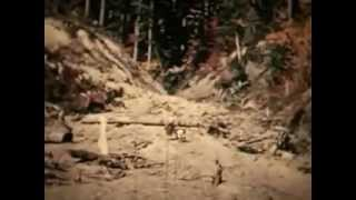 Complete Gimlin/Patterson Bigfoot Film - American Bigfoot