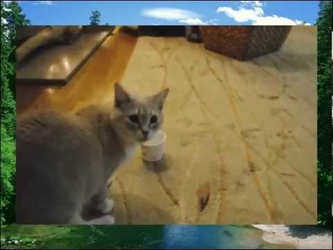 Животный юмор - кот застрял в банке из-под сметаны!