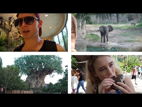 Florida Day 4: DISNEY'S ANIMAL KINGDOM! (2019 Vlog)