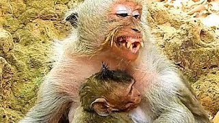 Million Pity Very Poor Tima Much Tired Feed Baby Timo, Baby Monkey Much Hungry & Keep Calm.