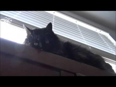 Señor Gato no joda porfavor quiero dormir