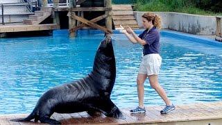 Funny Smart Cute Sea Lion Show