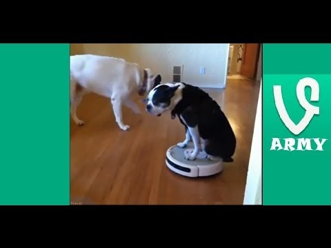 The Best Funny Animals VINES of SEPTEMBER 2013 Compilation! (34 VINES!) [HD] Part 20
