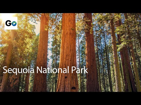 Unknown Sequoia National Park - Best Parks Ever - 4346