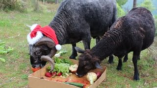 Rambro gets a Christmas day buffet lunch