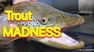 How to Catch Trout - Bow River Browns And Rainbows