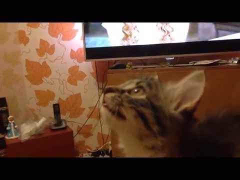 Котенок увидел муху ! Смешной котик) funny cats, kitten saw fly! Cat catch fly