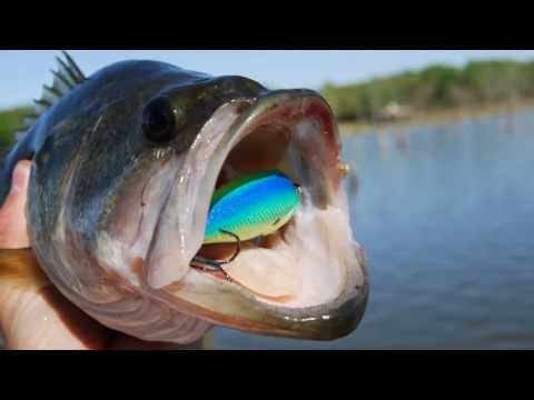 Spawning Bass Crankbait Fishing Tip - Speed Cranking Squarebill Crankbaits - Lake Fork Bass Fishing