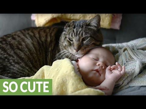 生まれたばかりの赤ちゃんにすり寄って見守る優しい猫