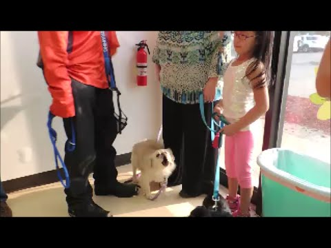 Dogs Fear Biting Fix in Minutes - Dog Seminar - Dog Whisperer BIG CHUCK MCBRIDE